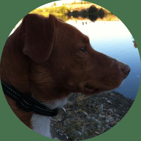 lui - Perro con Educación Canina siempre en Positivo - Perropositivo.com