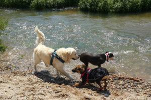 socializacion-perros