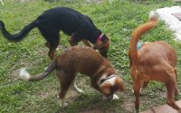 socializacion-perros2