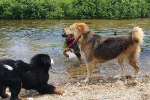 socializacion-perros3
