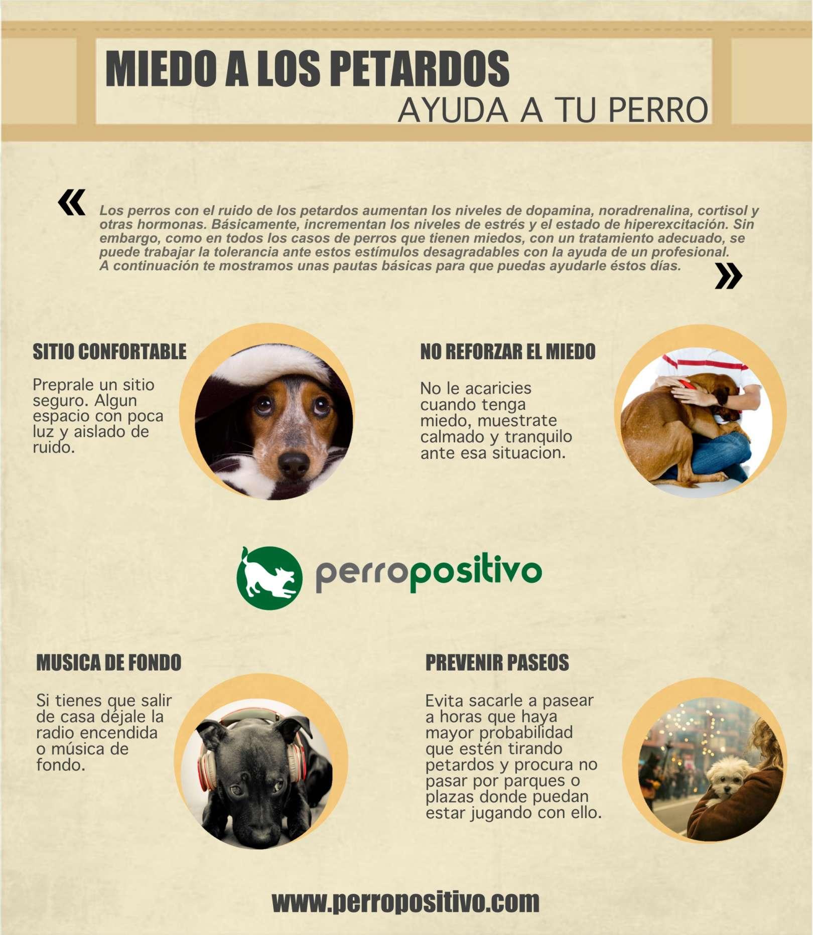 Pautas miedo petardos, como ayudar a tu perro - Perropositivo.com