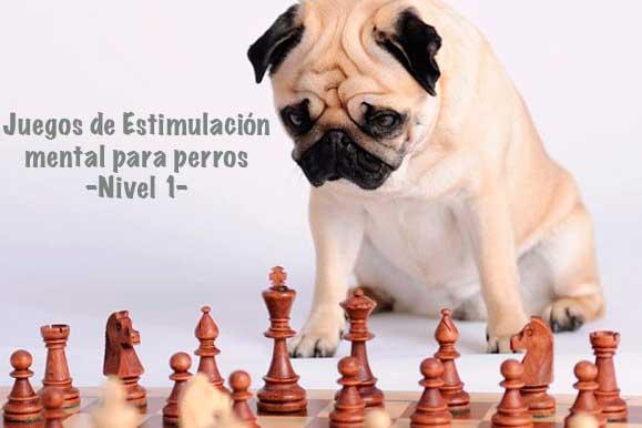 Foto Artículo Juegos Estimulación Mental