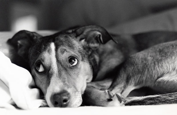 Perro mirando a un bebe - Adaptacion perros y bebes en casa - PErropositivo.com