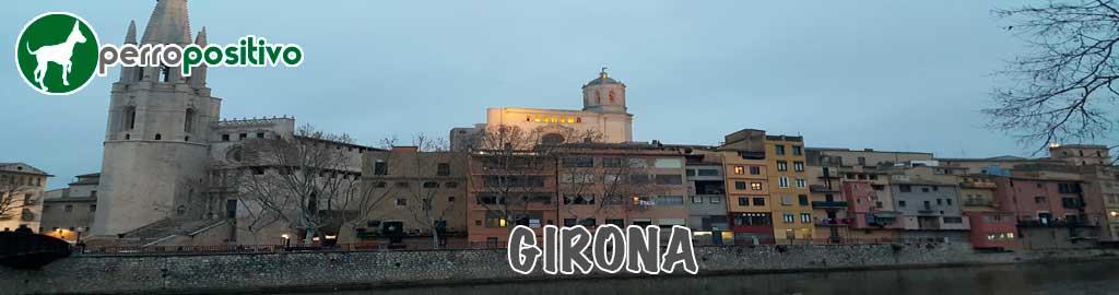 Adiestramiento de perros Girona