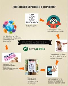 infografia que hacer si se pierde tu perro