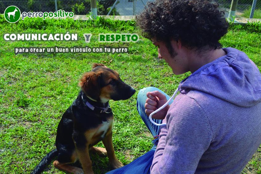 comunicacion y respeto para crear vinculo perro