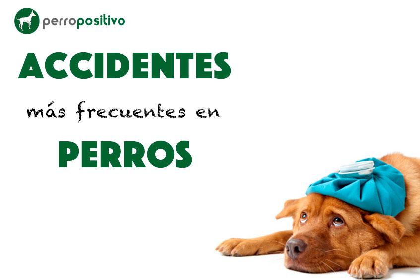 Accidentes más frecuentes en perros