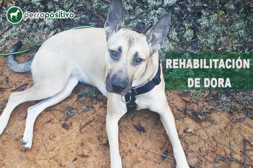La rehabilitación de Dora, una perra con miedo