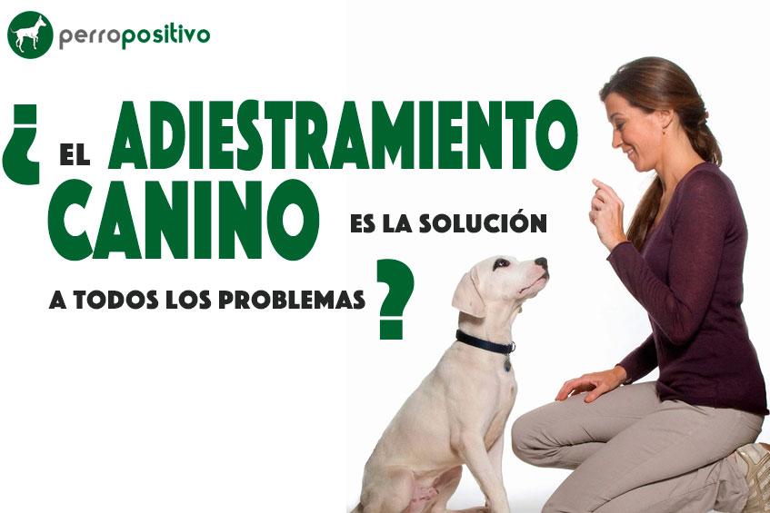 el adiestramiento canino es la solución a todos los problemas