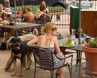 perro inseguro en una terraza