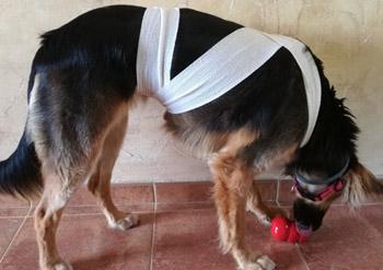 Maki Ttouch - Perro rehabilitado tras su miedo a los petardos - Perropositivo.com