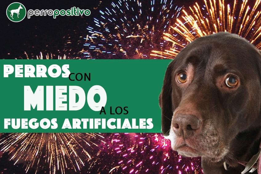 Pautas Perros con miedo a los fuegos artificiales