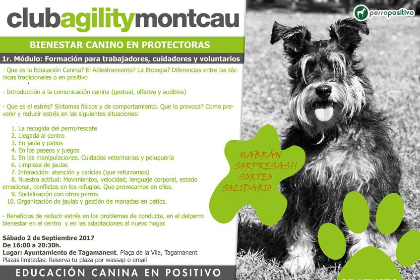 bienestar-canino-en-protectoras