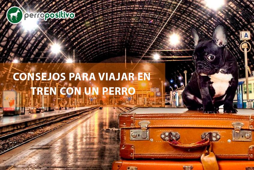 Consejos-para-viajar-en-tren-con-un-perro