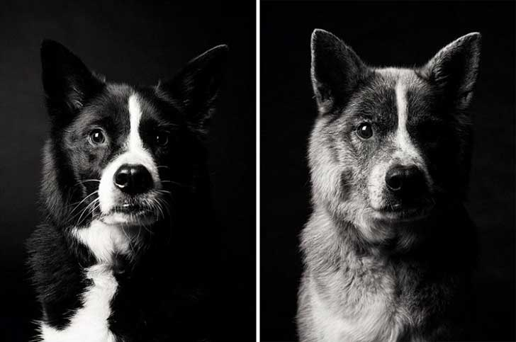 cachorro y perro viejo