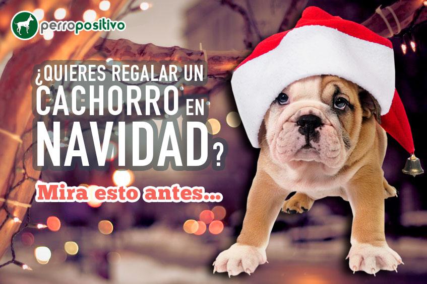 Quieres-regalar-un-cachorro-en-Navidad