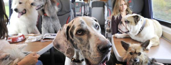 perros en el tren