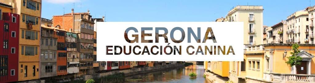 educacion canina gerona y Girona - Perropositivo.com