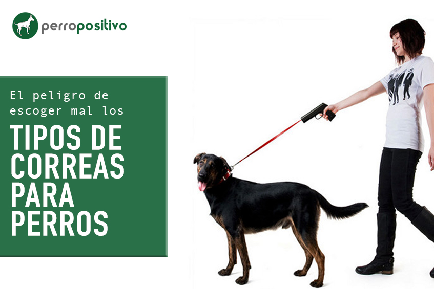 Tipos de correas para perros