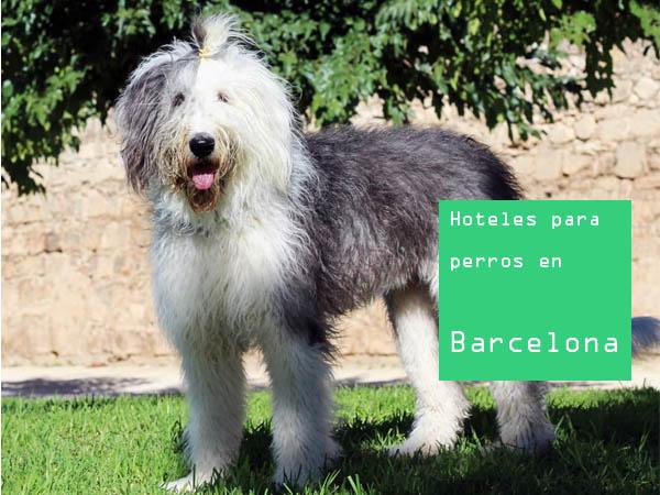 Hoteles para perros en Barcelona con Perropositivo.com