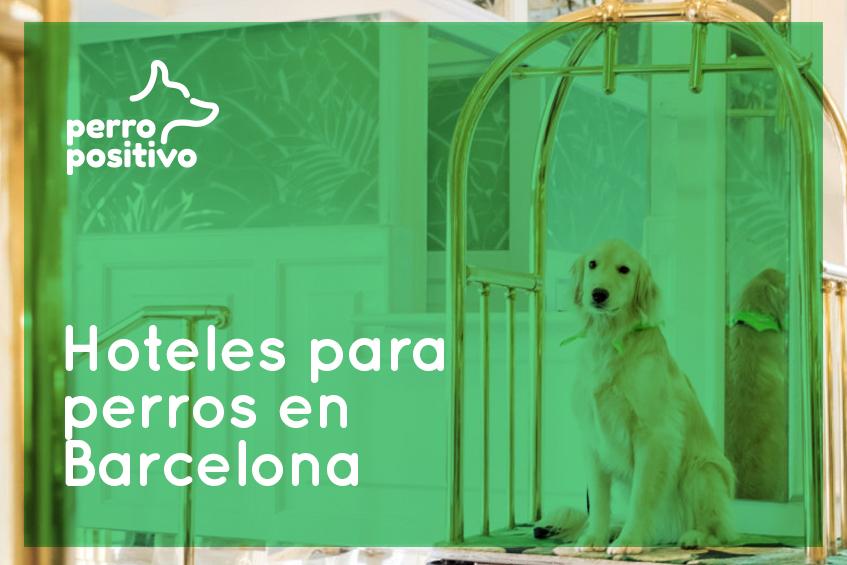 Hoteles para perros en Barcelona