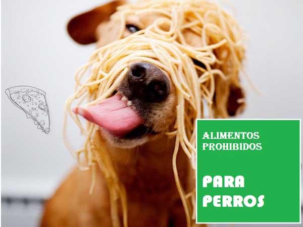 Alimentos prohibidos para perros - Perropositivo.com
