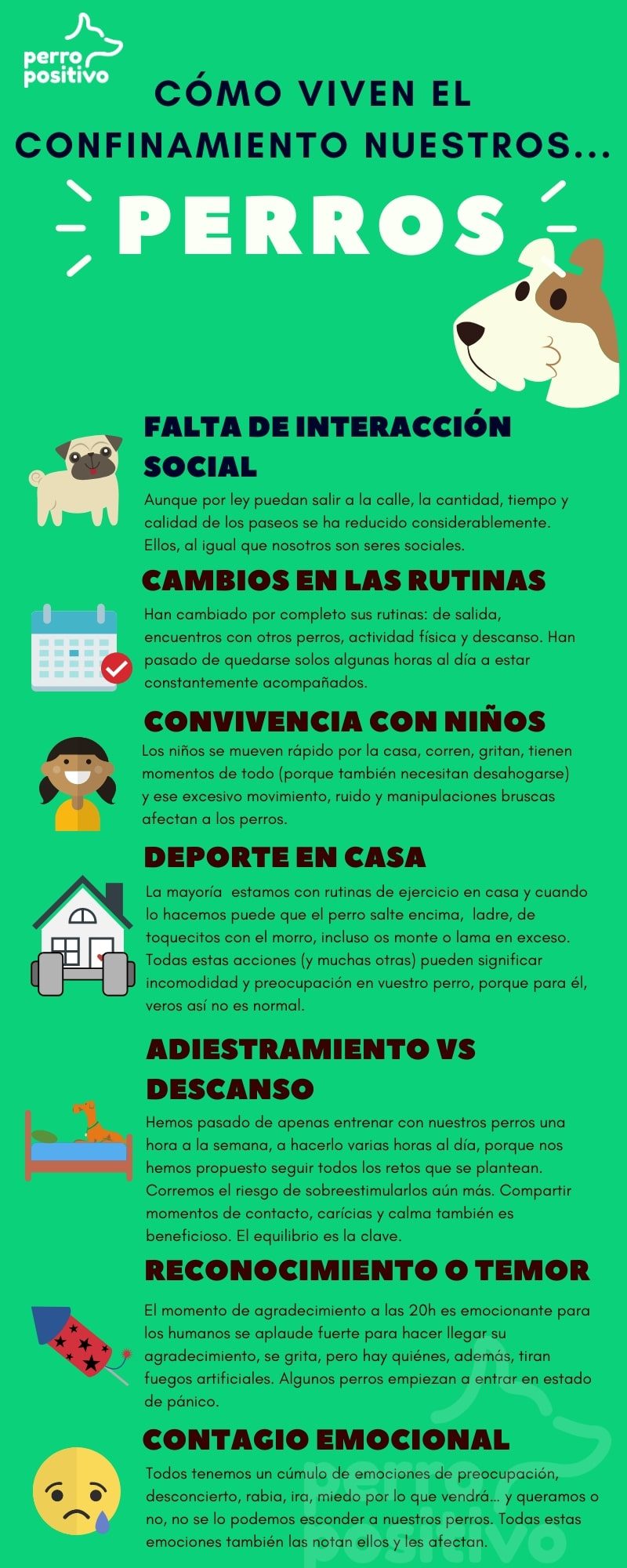 infografía perros covid-19