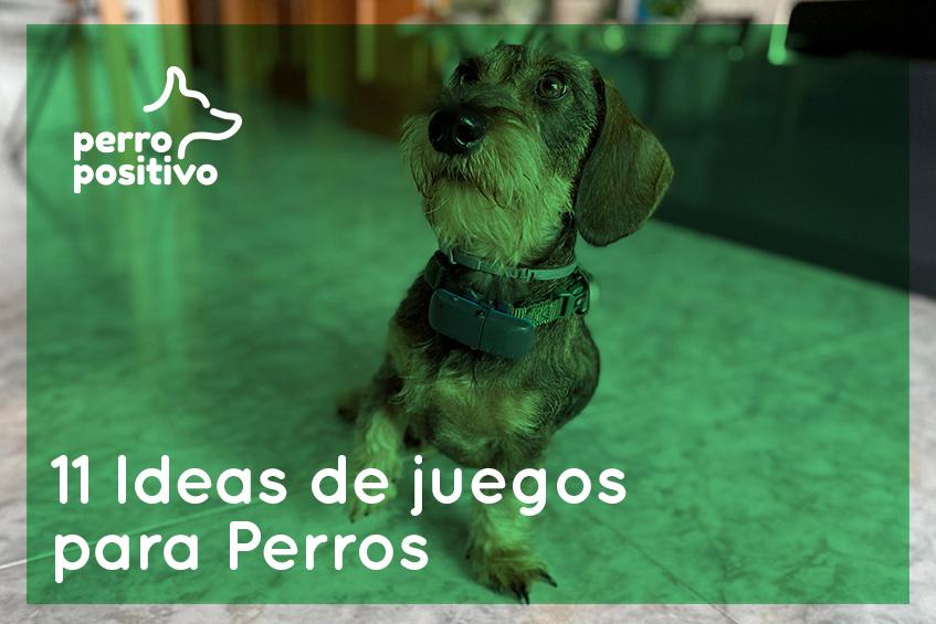 ideas de juegos para perros