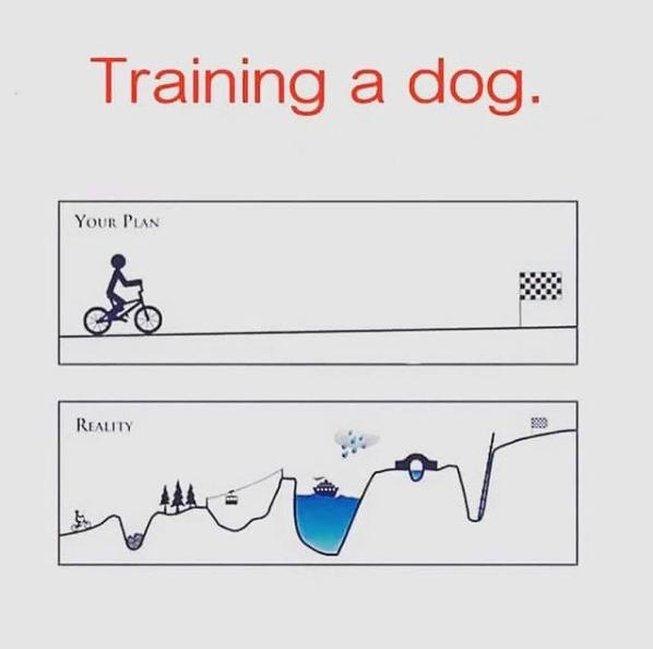 etapas del entrenamiento canino